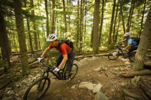 Two men mountain biking through the woods.