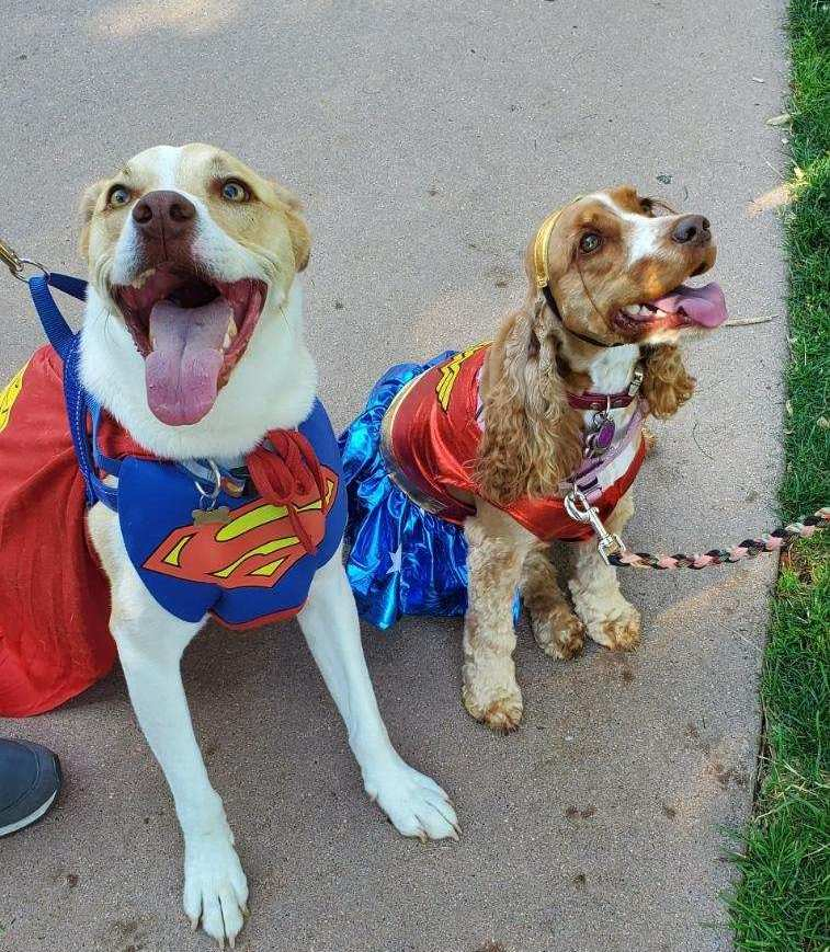 Two dogs dressed up in costumes